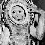 обезьянка Сэм