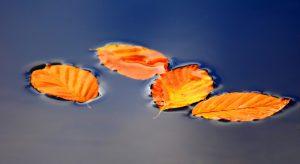 желтые листья в воде