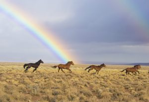 лошади на фоне радуги